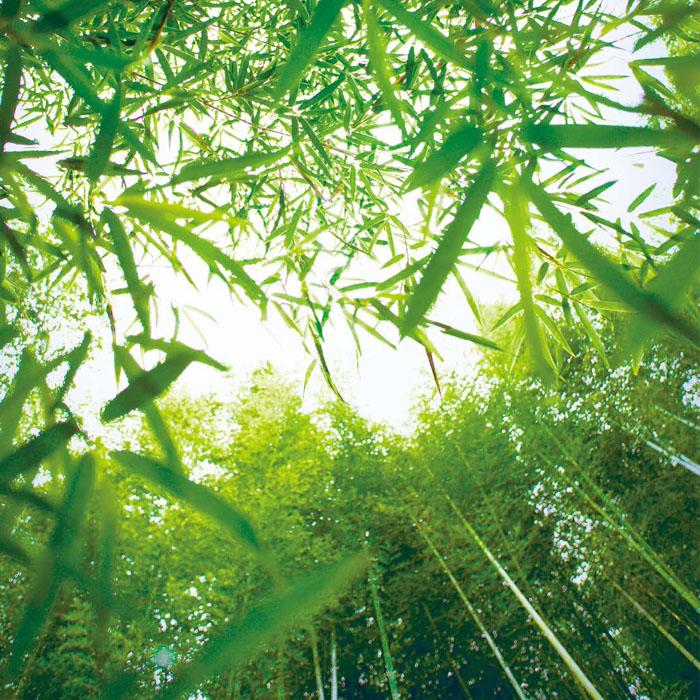 대나무사진